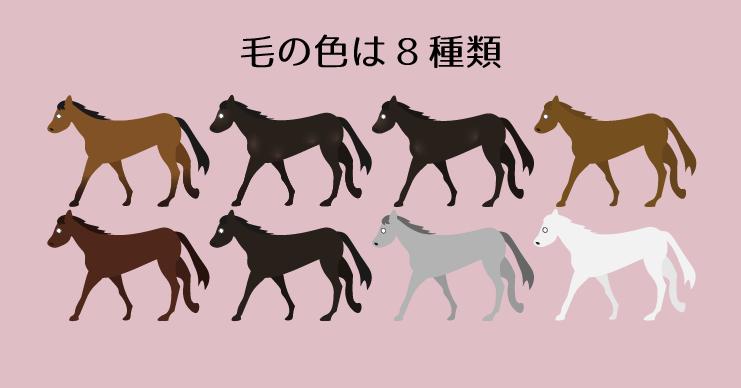 競走馬の毛の色は8種類